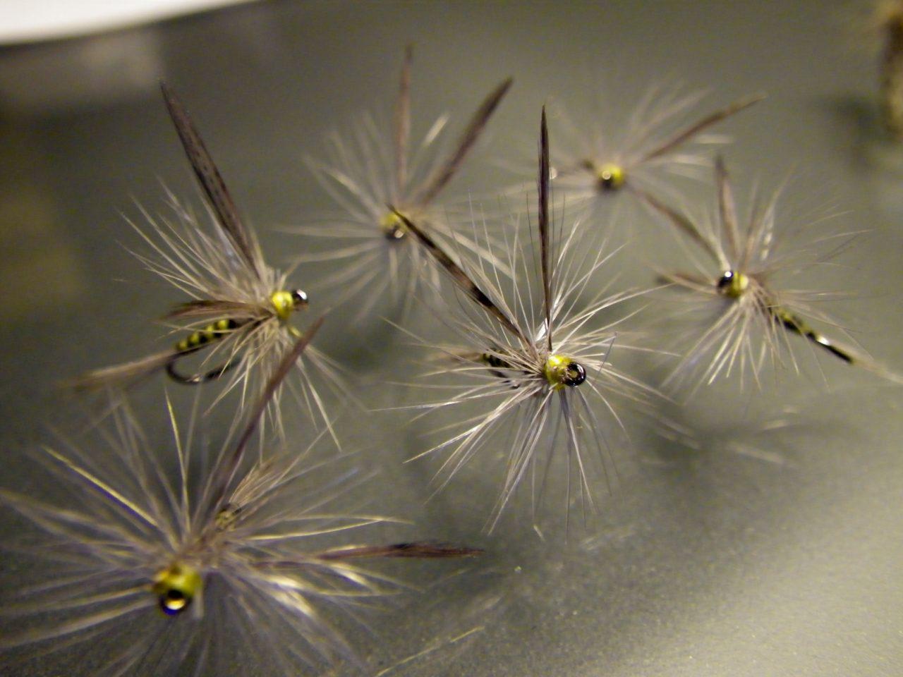 Superbes Grises a corps jaune ailés de Xav 06