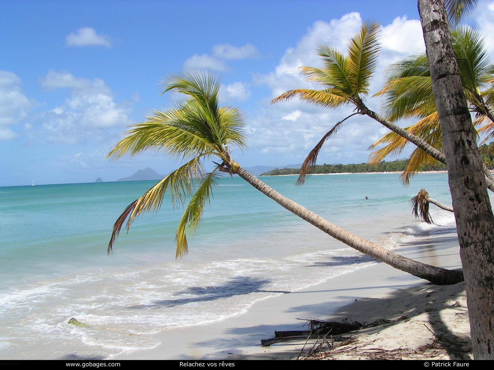 Martinique Peche A La Mouche