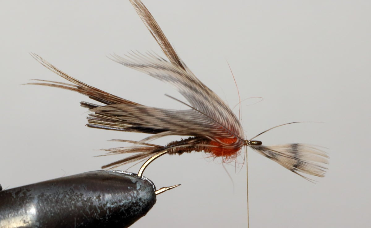 pheasant12