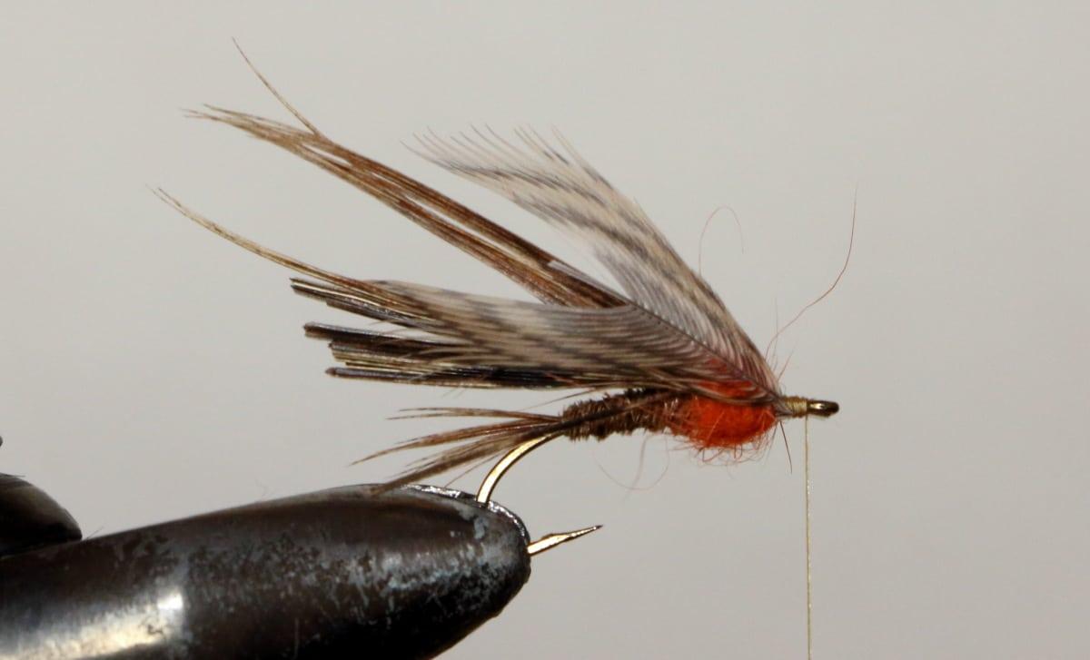 pheasant13